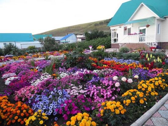 Фото цветы возле дома