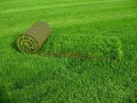 Технология выращивания газона на продажу