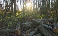 Выбор древесины для копчения