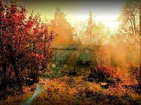 7 лучших вариантов многолетних цветов для посадки осенью